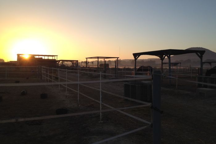 The Easy Horse Care Rescue Centre in Spain at dawn.