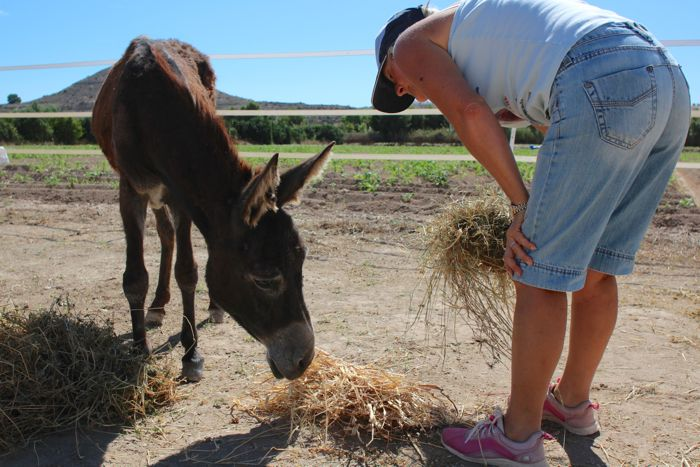 Sue feeding a donkey