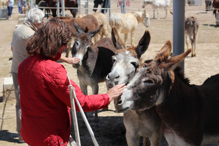 Open day visitors with donkeys