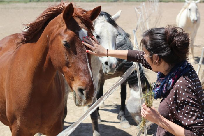 Eight-week horse rescue centre internship