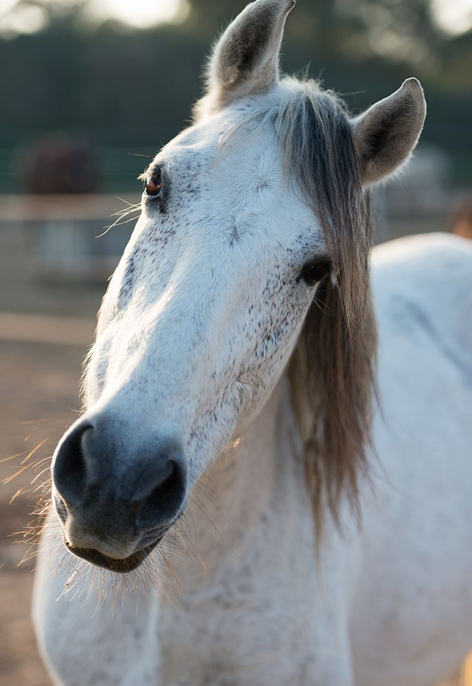 Make a donation to horse rescue in Spain