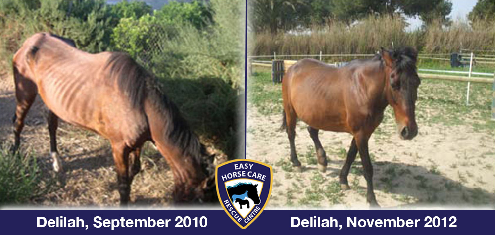 Delilah before and after
