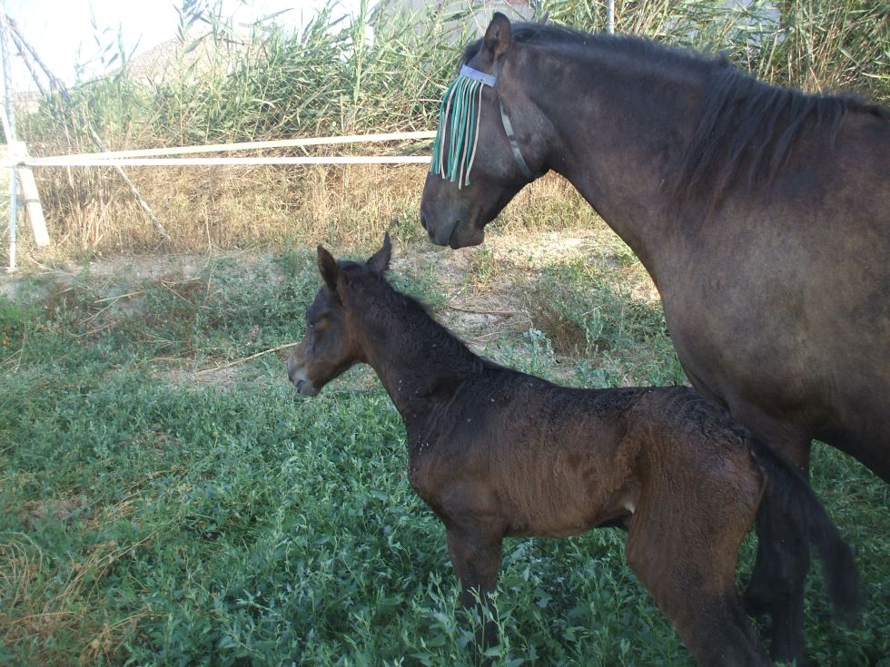 Katy Rose as a foal with mum Sophia