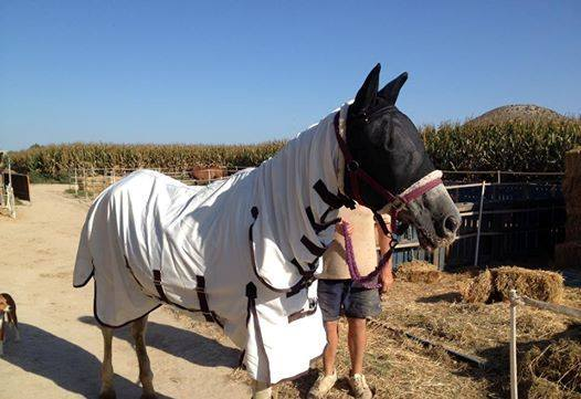 Melody in October 2014