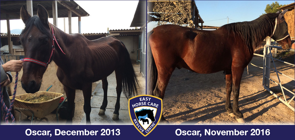Oscar before and afterr