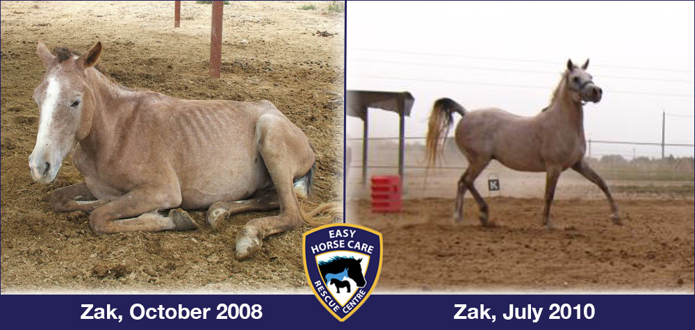 Zak before and after