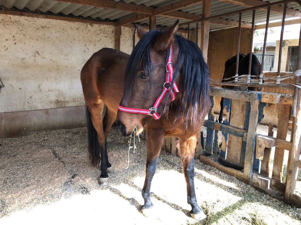 Filly rescued February 15 2018