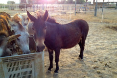 Visit the Easy Horse Care Rescue Centre in Spain on our open day.