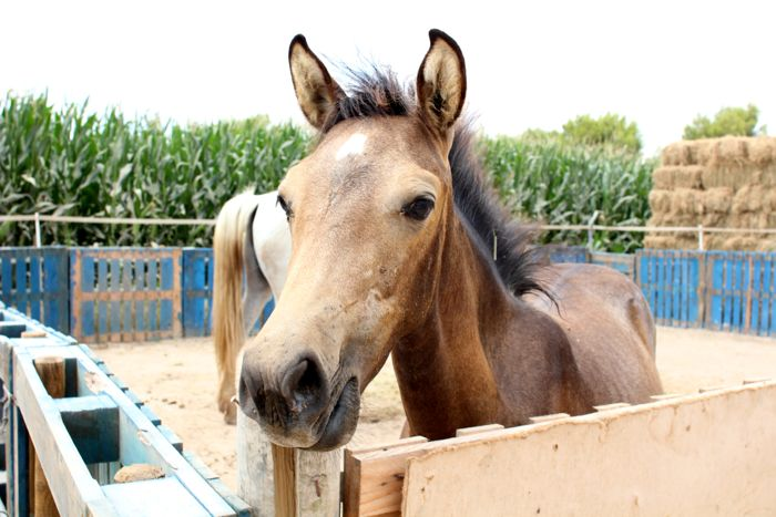 A foal born to a rescued mare at the Easy Horse Care Rescue Centre in Spain.
