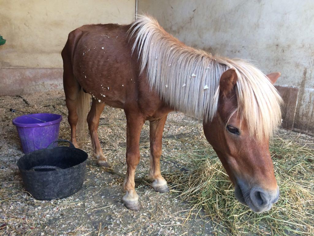Pony rescue July