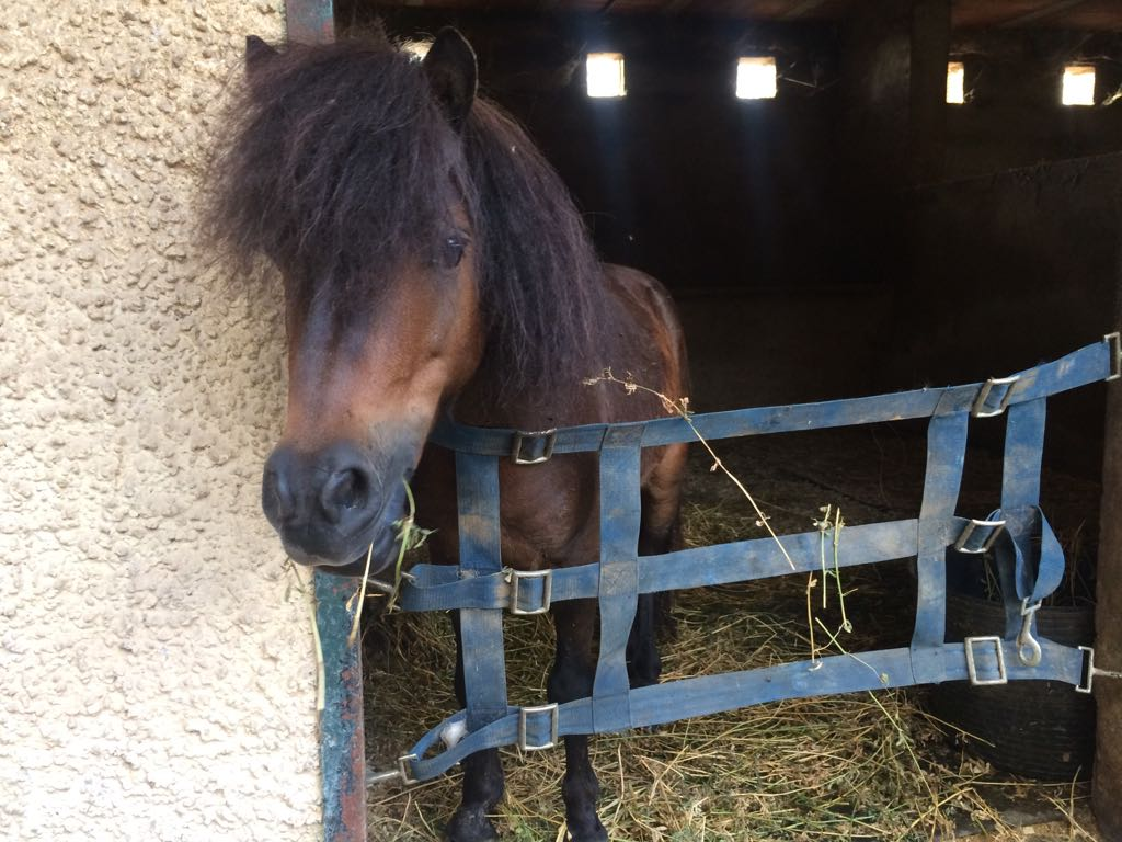 Pony rescued on August 19 2017