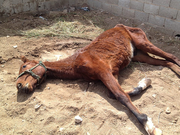 Torrevieja horse left to starve