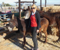 Elaine Sissons at Easy Horse Care Rescue Centre 1